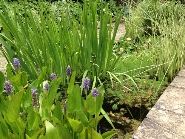 Water plants at Cloudehill. Janna Schreier