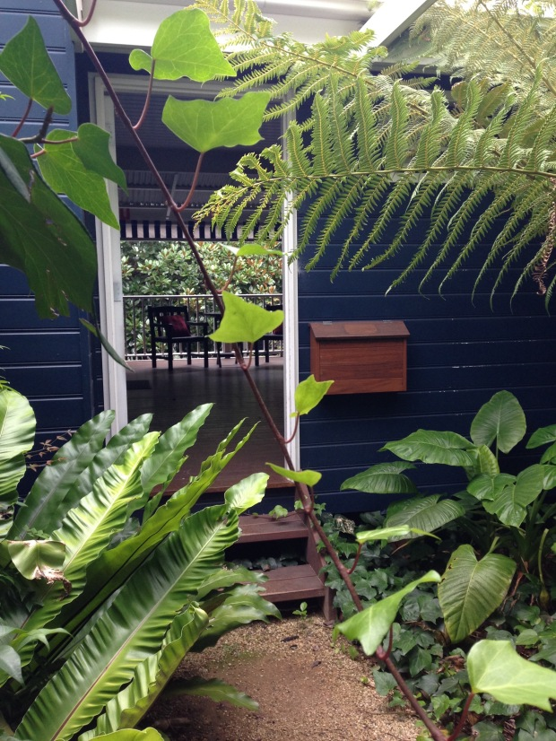 Asplenium, Alocasia, Dicksonia Shady Natives at Bells. Janna Schreier