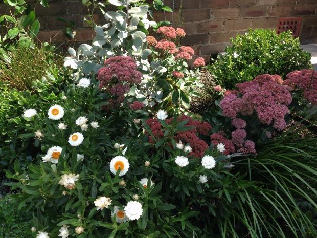 Abundant planting at Brendan Moar's garden in St Peters. Janna Schreier