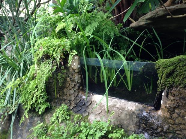 Andrew's Vaucluse infinity pool. Janna Schreier