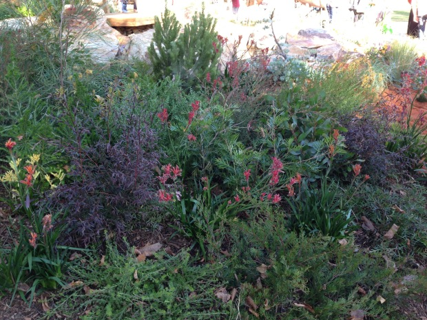 Beautiful native plantings at 'The Bronzed Brolga'. Janna Schreier
