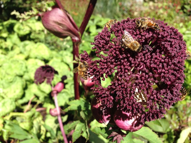 Bees swarm over Ian Barker's Angelica gigas at MIFGS. Janna Schreier