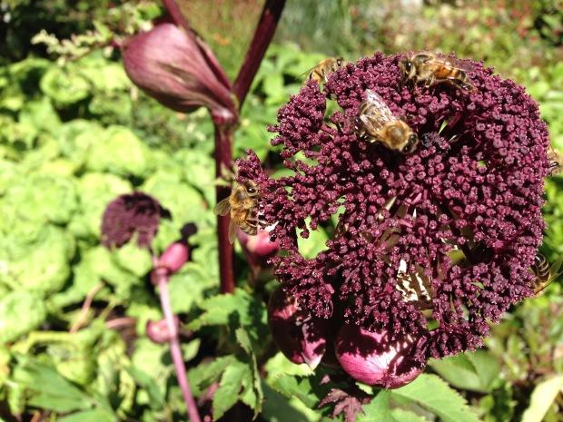 Bees swarm over Ian Barker's Angelica gigas at MIFGS. Janna Schreier