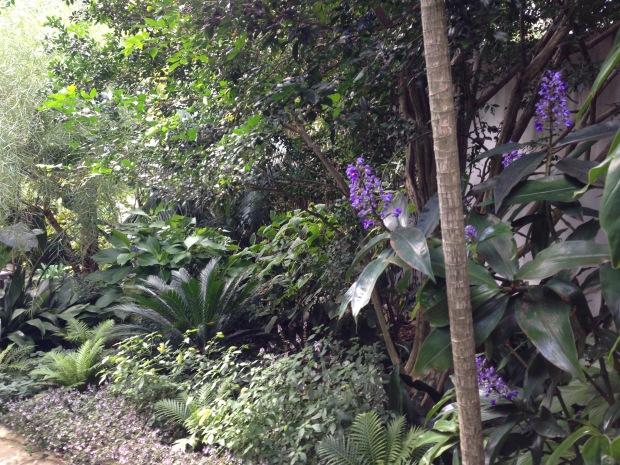 Blue Ginger, cycads and ferns. Janna Schreier