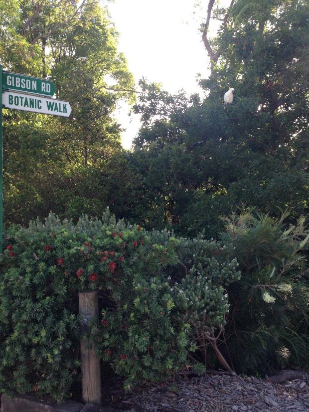Botanic Walk Callistemon and Grevillea. Janna Schreier