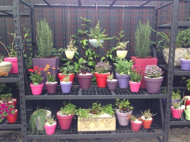 Bright pots at Brendan Moar's St Peter's garden. Janna Schreier