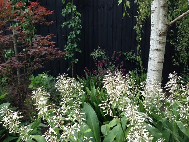 Burgundy foliage and flowers in Melbourne. Janna Schreier