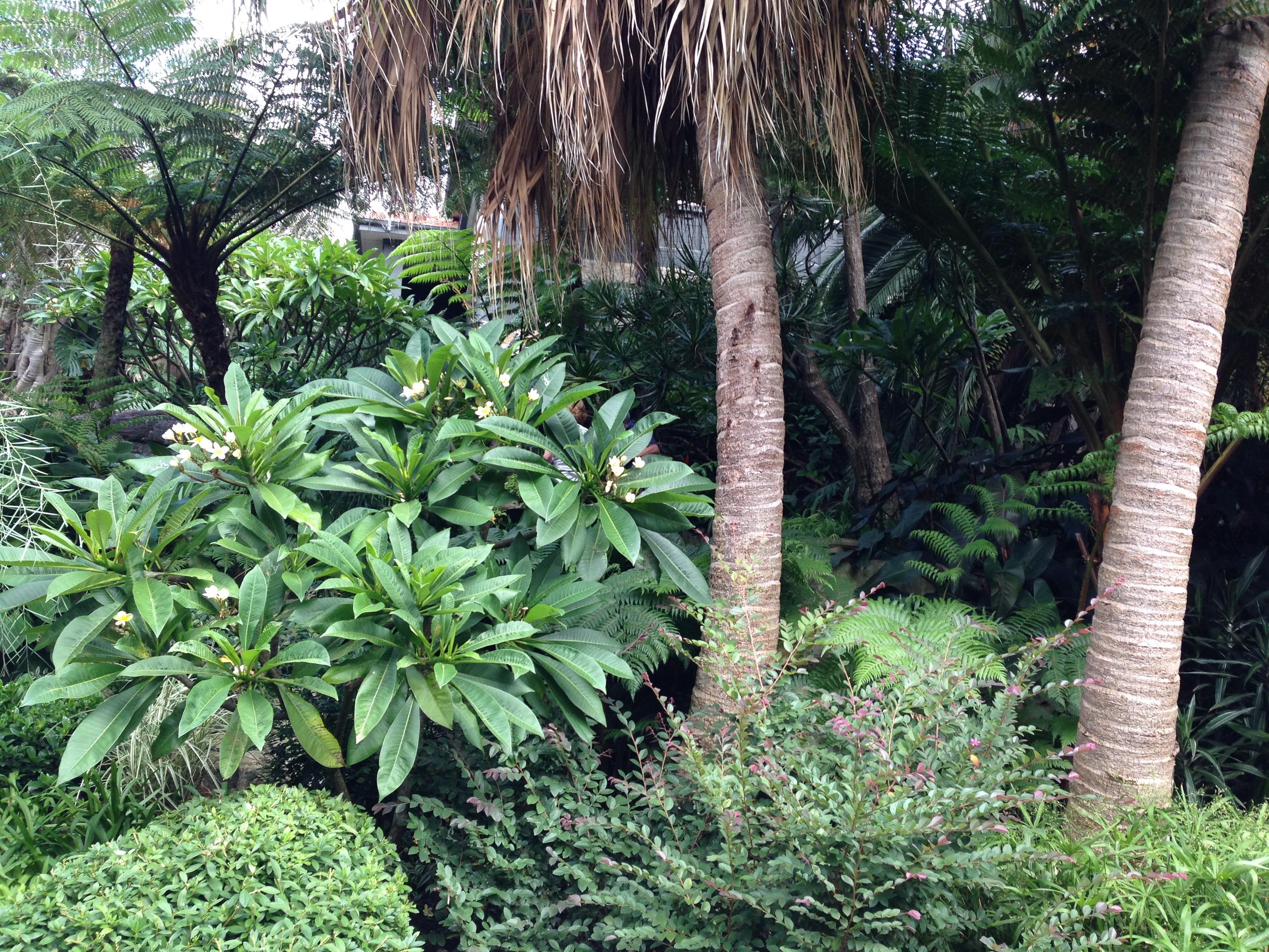 Subtropical sydney oasis janna schreier garden design for Garden design ideas nsw