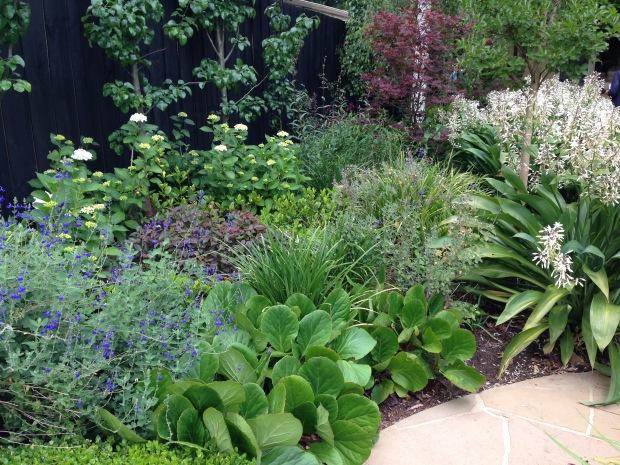 Contrasting texture in Melbourne garden. Janna Schreier