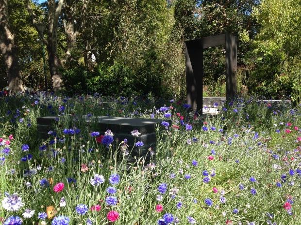 Cornflower meadow at Ian Barker's MIFGS garden. Janna Schreier