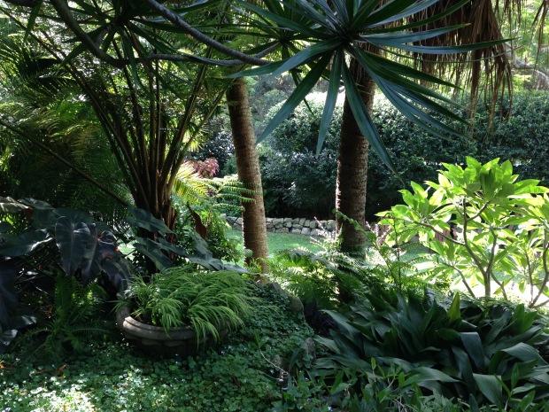 Deep subtropical planting. Janna Schreier
