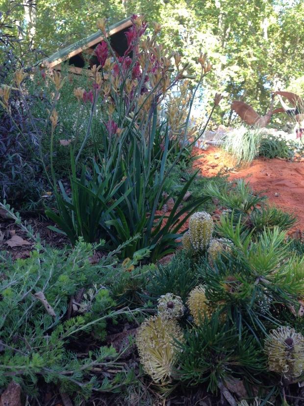Native plantings at 'The Bronzed Brolga'. Janna Schreier
