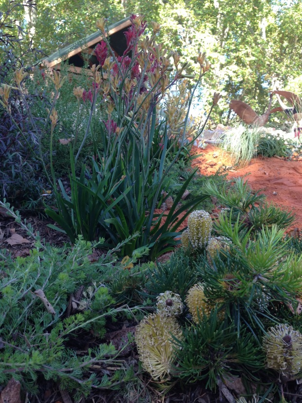 Native plantings at 'The Bronzed Brolga'. Janna Schreier