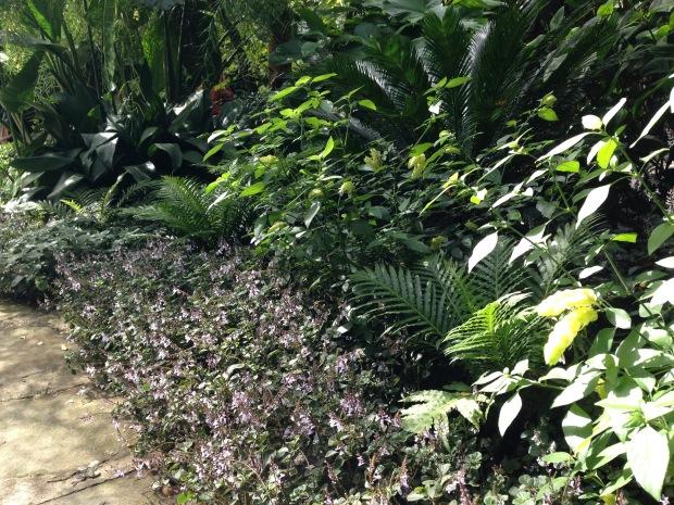 Sydney subtropical planting. Janna Schreier
