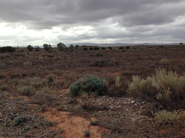 A view from inside the Arid Lands Botanic Garden. Janna Schreier