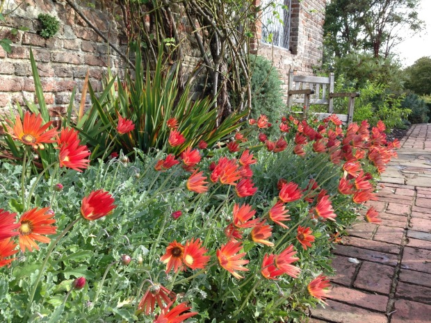 Arctotis 'Flame' at Sissinghurst garden, Kent. Photo: Janna Schreier