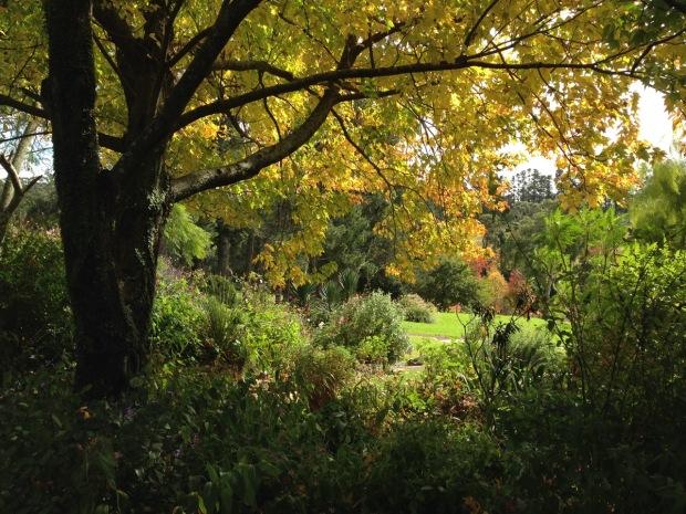 Autumn colour at 'Woodgreen', Bilpin. Janna Schreier