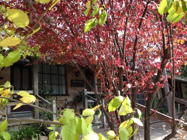 Autumn colours in Mintaro. Janna Schreier