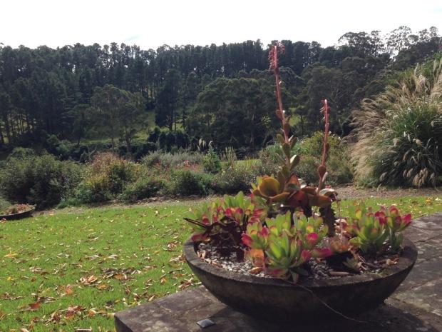 Bowl of succulents at Woodgreen. Janna Schreier