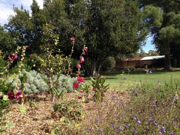 Bungaree Station garden. Janna Schreier