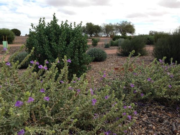 Flowers in the Arid Lands Botanic Garden. Janna Schreier