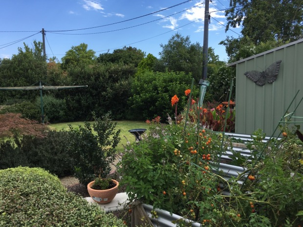 Joyce's garden some years on