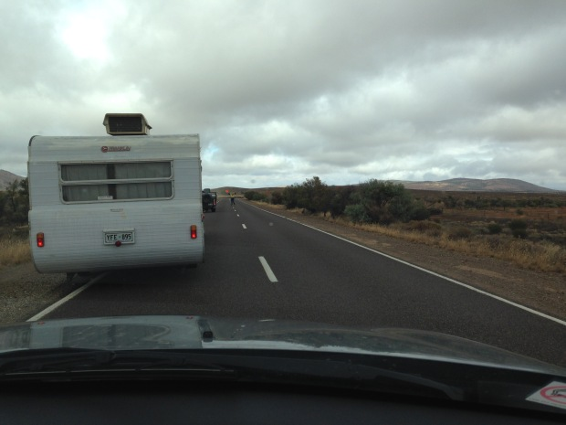Sheep crossing in South Australia. Janna Schreier