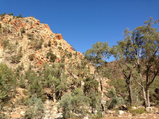 Trees growing out of rock in the Flinders Ranges