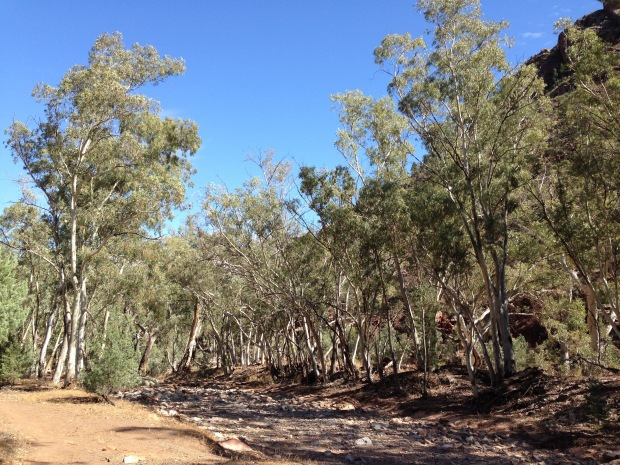 Trees lining the creek bed in the Flinders Ranges. Janna Schreier
