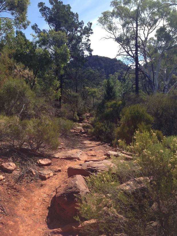 Typical pathway through the Flinders Ranges. Janna Schreier