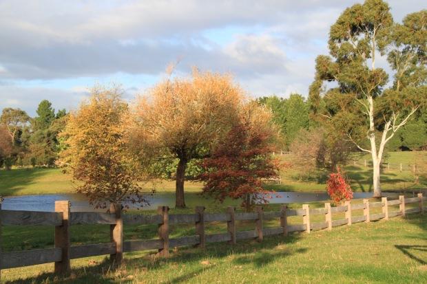Autumn at Cruden Farm. Janna Schreier