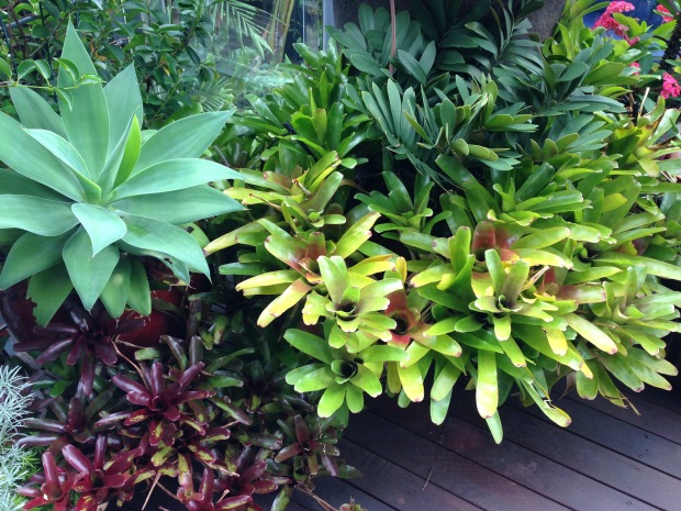 Bromeliads and other drought tolerant plants on the decking. Janna Schreier