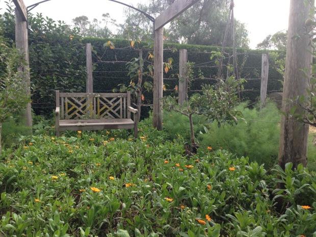 Calendula carpet at Glenmore House vegetable garden. Janna Schreier