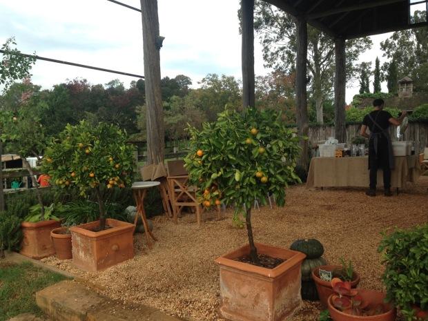 Citrus guarding an entrance at Glenmore House. Janna Schreier