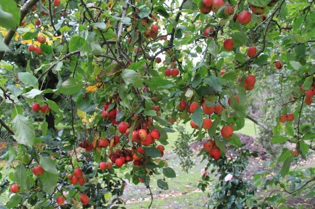 Colourful crab apples at Cruden Farm. Janna Schreier