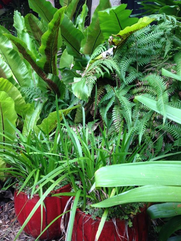 Lush greens at 'Saturday'. Janna Schreier
