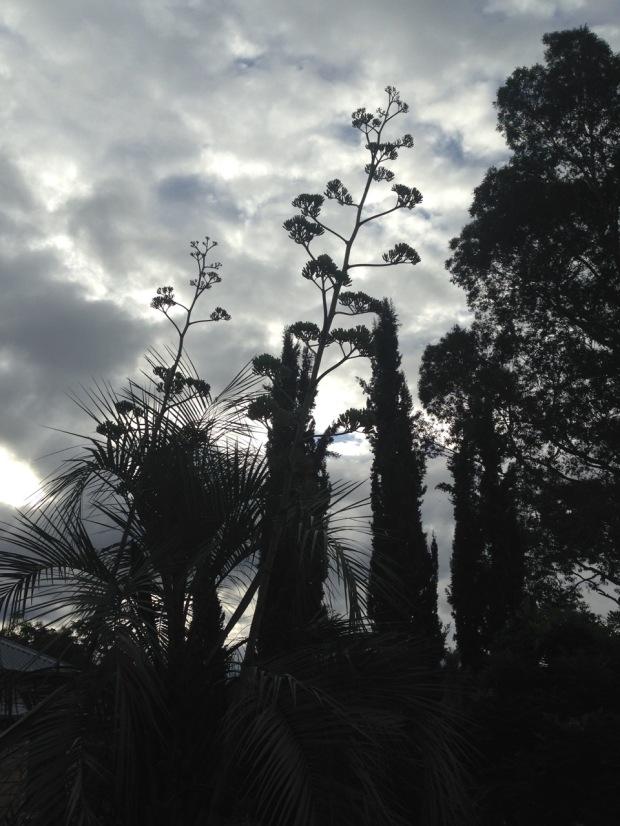Plant silhouettes at Glenmore House. Janna Schreier