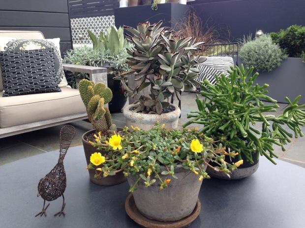 Adam Robinson's Roof Terrace Garden. Janna Schreier