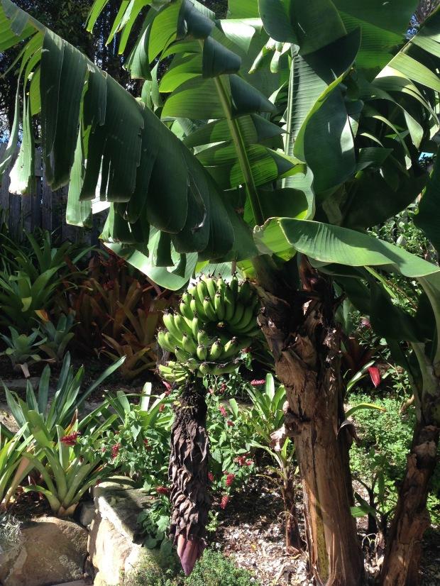 Bananas. Janna Schreier