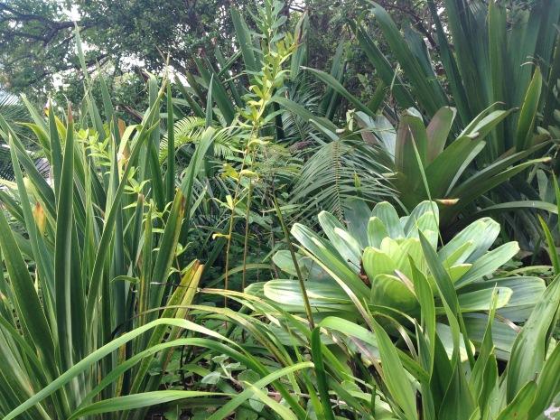 Bromeliads and strappy forms. Janna Schreier