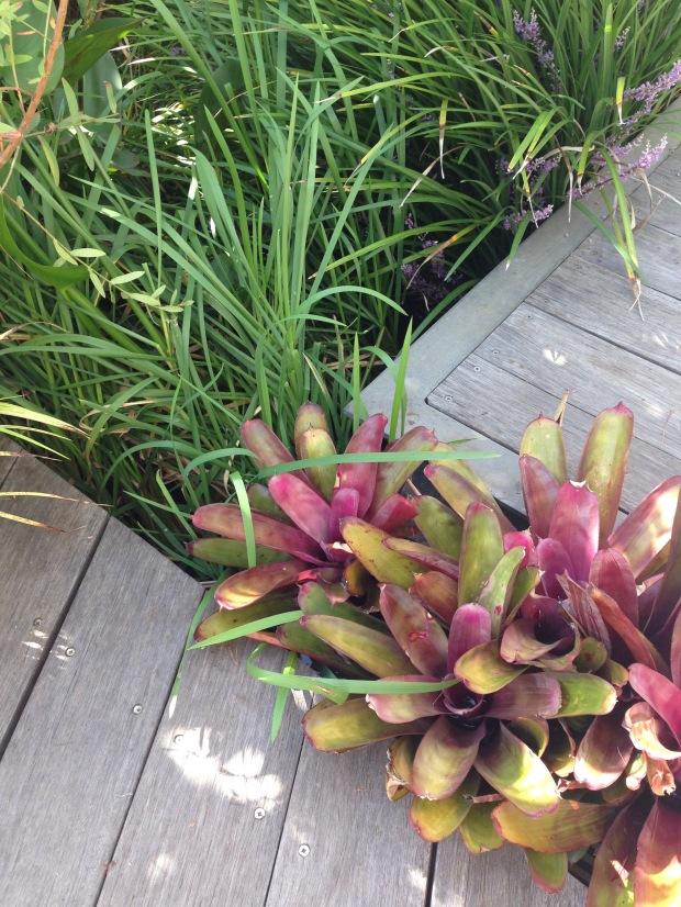 Bromeliads fill spaces between pathways. Janna Schreier