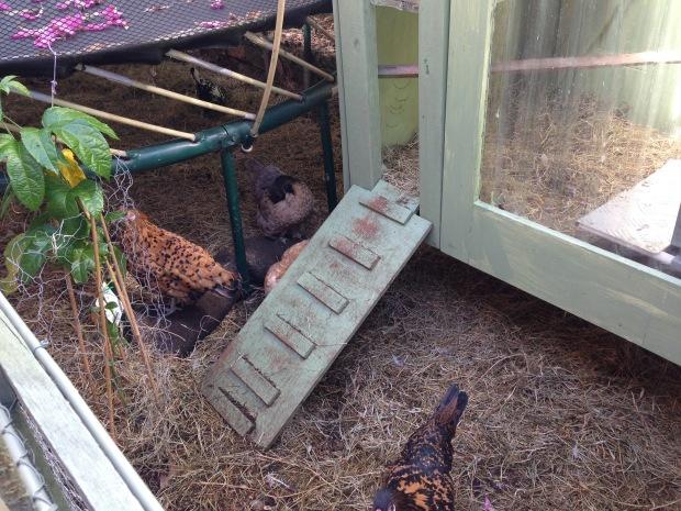 Chicken coop under the trampoline. Janna Schreier