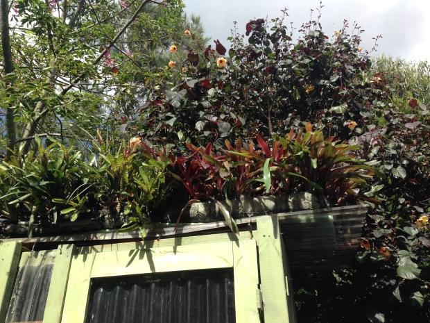 Chicken house planted roof top. Janna Schreier