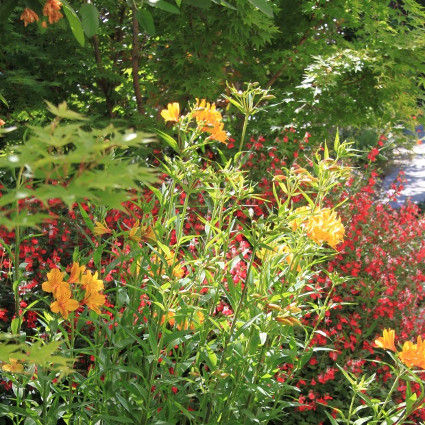 Hot colours garden bed