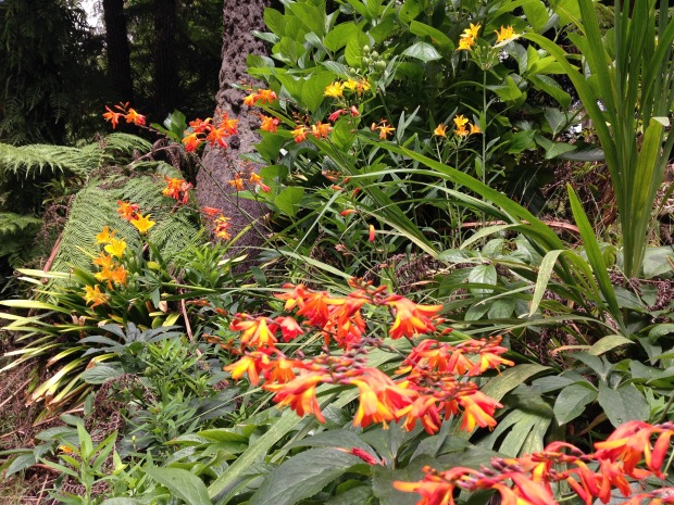 Hot Crocosmia and Alstroemeria colours