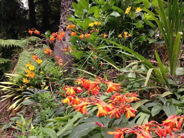 Hot Crocosmia and Alstroemeria colours