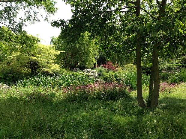 Informal planting in Queen Mary's Garden, Regent's Park. Janna Schreier