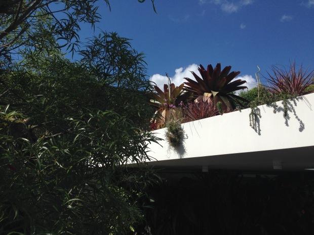 Mark Paul's roof top garden. Janna Schreier