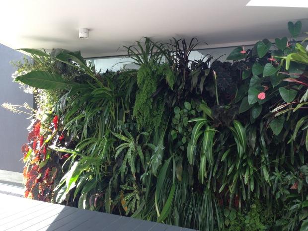 Mark Paul's vertical garden. Janna Schreier
