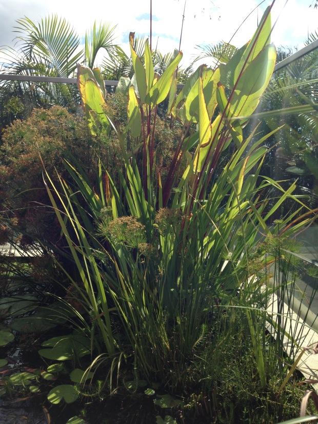 Mark Paul's water garden. Janna Schreier